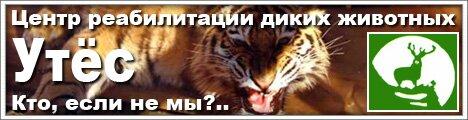 Тигромания запускает интернет-акцию: «Утёс». Кто, если не мы?..