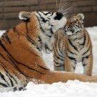 Зоопарк Буффало