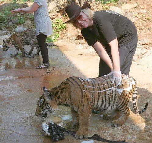 День в тигриной стае
