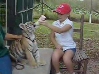 Девочка кормит тигрёнка из бутылочки