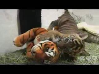 Комната тигрёнка