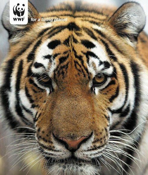 Про тигра и тигрят