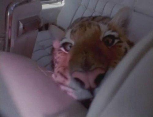 Голодный тигр!!!