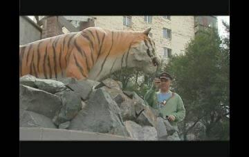 «Приморье with love» с Иваном Панфиловым. Уссурийский тигр.