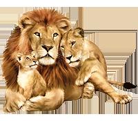 Львиный мир!