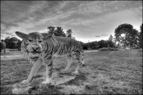 Малоархангельский тигр (фото)