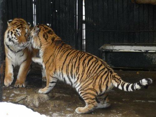 Пензенский зоопарк вошёл в ЕРАЗА