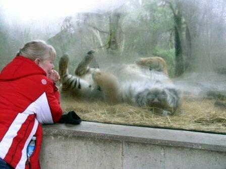 Тигр Глобус