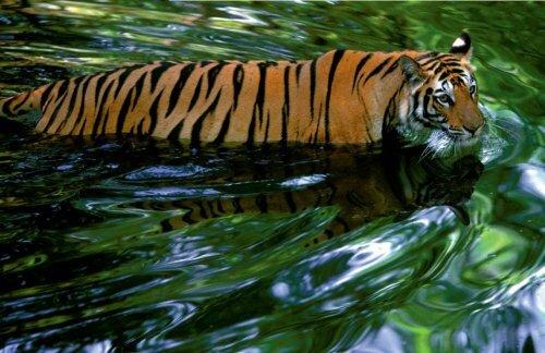 Национальные парки Индии