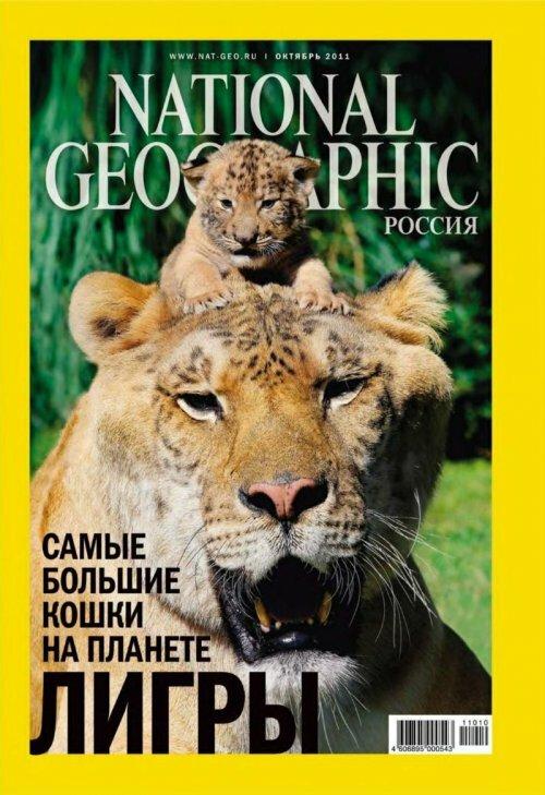National Geographic Россия. Лигр: размер имеет значение