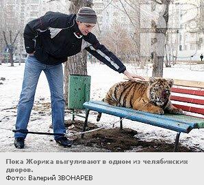 Тигренка Жорика отправят на курорт