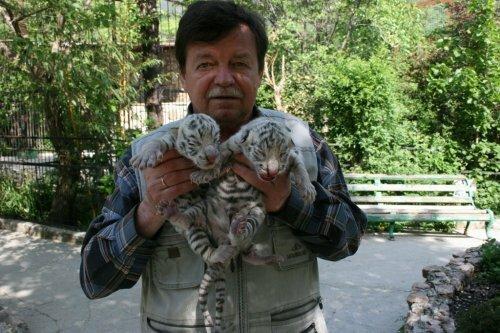 В Ялтинском зоопарке «Сказка» Тигрюля родила четверых тигрят