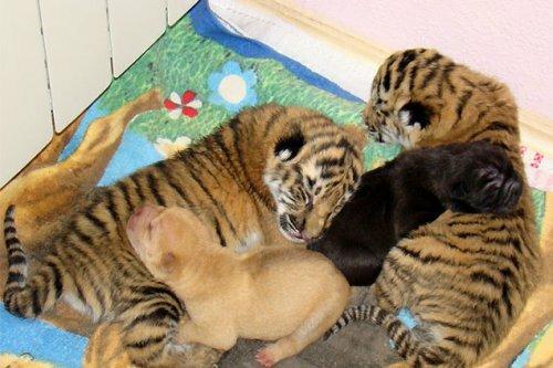 В Сочи узнали, что звери умеют любить