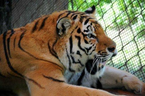 «Тигриному папе» Карену Даллакяну прислали новый отчет о Жорике (фото)