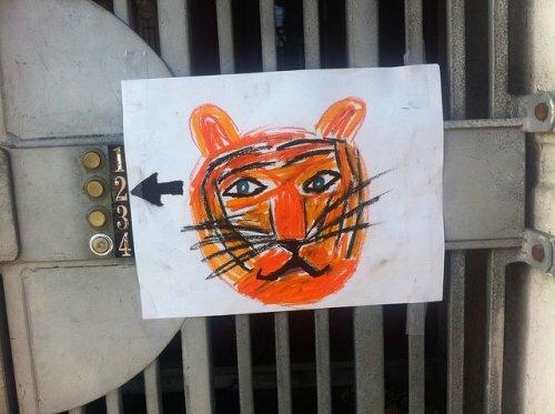 Пензенский зоопарк вступил в программу по сохранению амурских тигров и объявил конкурс для детей