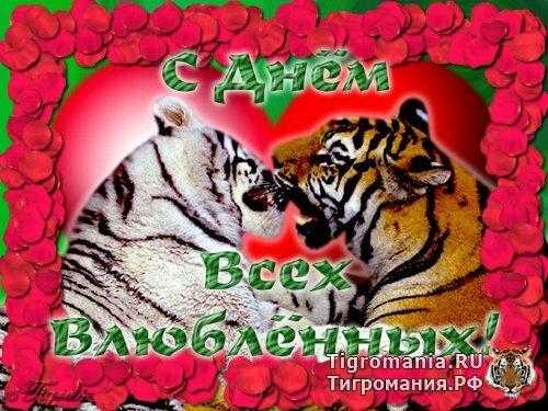 Одесский зоопарк готовится к свадьбе тигров