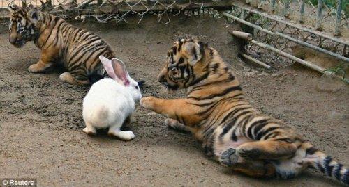 В зоопарке Циндао провели необычный эксперимент