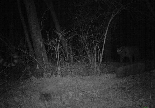 В Приморье удалось понаблюдать за тигриным семейством (фото)