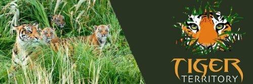 Международный день Тигра в Лондонском зоопарке