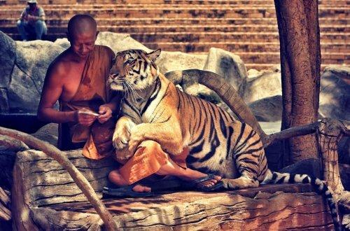 Тигры в абсенте